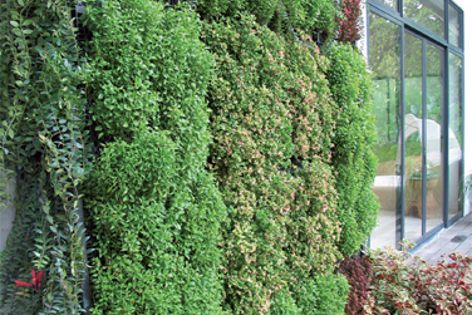 Elmich green roofs and green walls