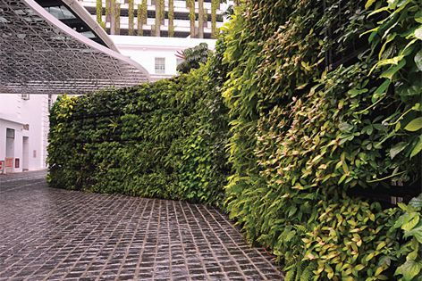 This Elmich green wall system has been installed at the Rendezvous Hotel in Singapore.