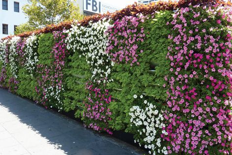 KHD supplies Garsy® Greenwall in two sizes, and customized versions.