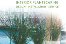 Ambius interior plantscaping